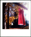 11/01/2004 Denver-A pink slip hangs from a tree on Forest Avenue in Denver.  Pink slips-a...