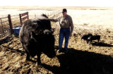 (YUMA., Colo., Dec. 12, 2005) Kenny Rogers, stand next to the families prized Angus bull, First...