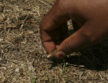 La' Kita Williams (CQ), 16, picks-up a bullet found in her front yard at the Denver Housing...