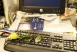 A yellow roses is placed on the keyboard of Rocky Mountain News reporter John Accola in wake of...