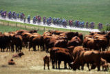 TDF140 - The pack rides past a herd of cows near Faulquemont, eastern France, during the 2nd stage...