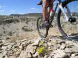 For Rocky Mountain Adventure, 7/8/06. Riders cruise along Lajitas Trail in Big Bend State Park in...