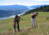 Workers build new trail near Mt. Hood, Oregon in 2005 during a trail building project. Photo by...