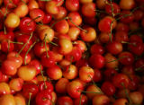 Organic cherries at Morton's Orchards Organic Tree-Ripe Fruits at the Boulder Farmer's Market in...