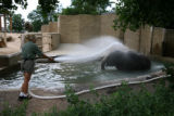 Zoo keeper Chris Bobko (cq) sprays Dolly, an Asian elephant, with water to cool her off Tuesday...