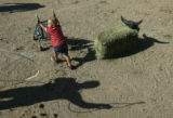 MJM283  Cooper Kyler, 2, of Pawhuska, Okla., pushes a stroller by a dummy roping steer as his...