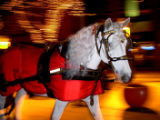 DENVER, CO -- Moonlight, a Percheron mare, pulls a carriage down 16th Street Mall on Valentine's...