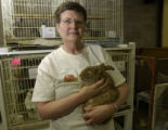 Nancy LaRoche, (cq), holding Wesley, (cq), a mix male rabbit about 4 years old lost his left ear...