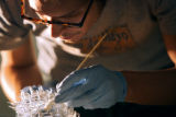 Assistant Conservateur David Turnbull (cq) of Denver carefully cleans a blown glass bird wing that...